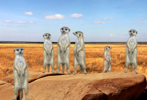 SKU : 20352 - Meerkats - Motion Postcard