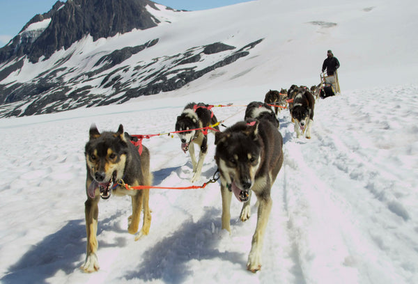SKU : 20360 - Dog Sled - Motion Postcard