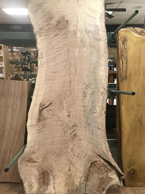 Spalted Curly Beech Natural Edge Slab  79