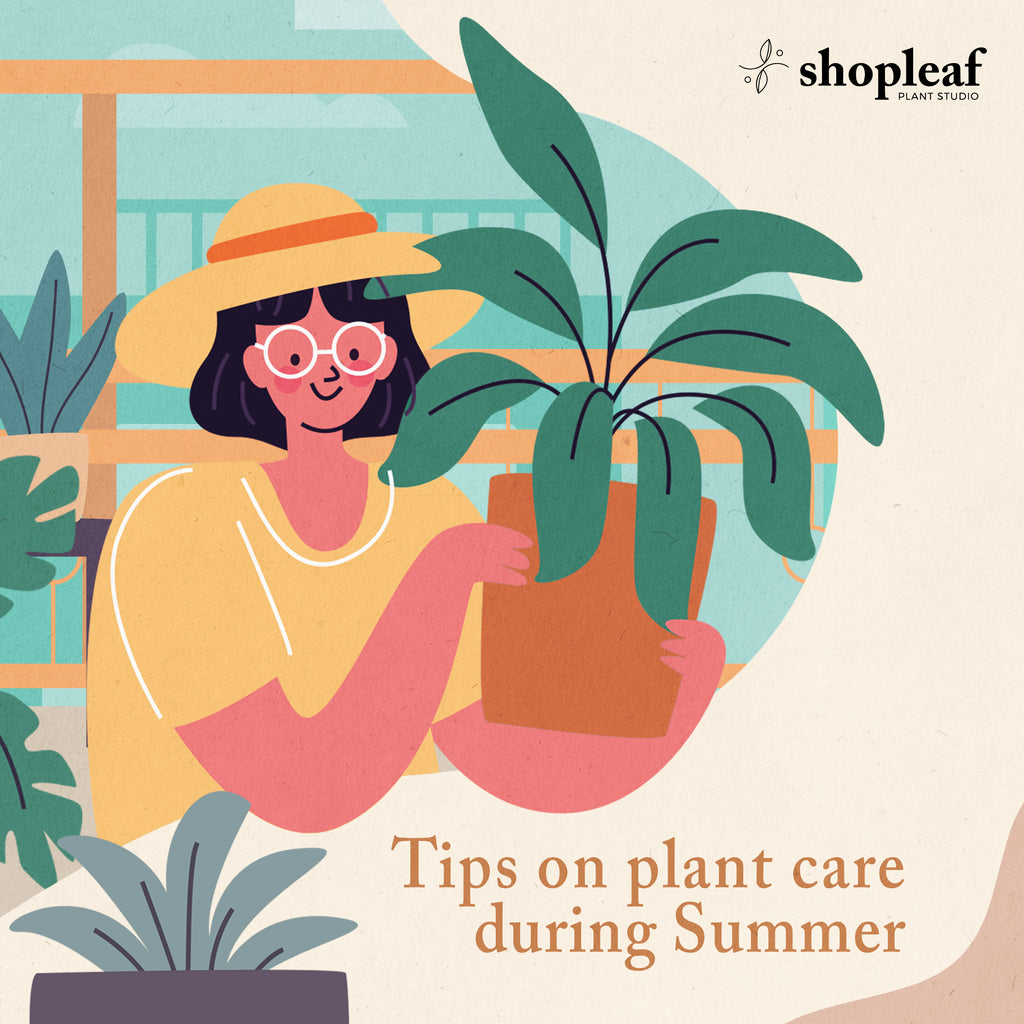 plant care during summer