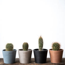 Load image into Gallery viewer, Cactus Bundle on Ecopots Mini