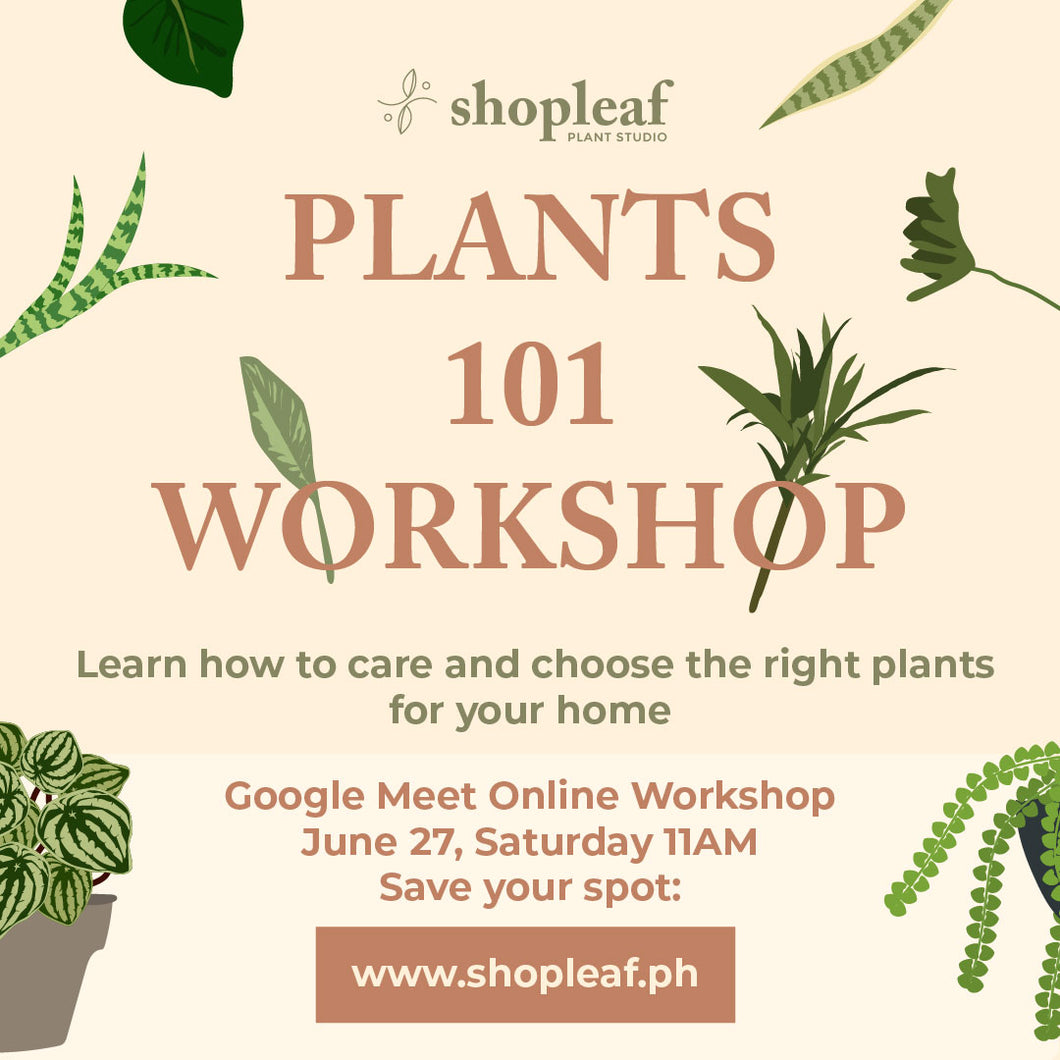Plants 101 Workshop: Batch 1