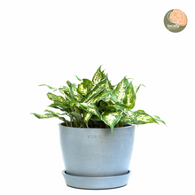 Load image into Gallery viewer, 3in1 Dumb Cane (S)