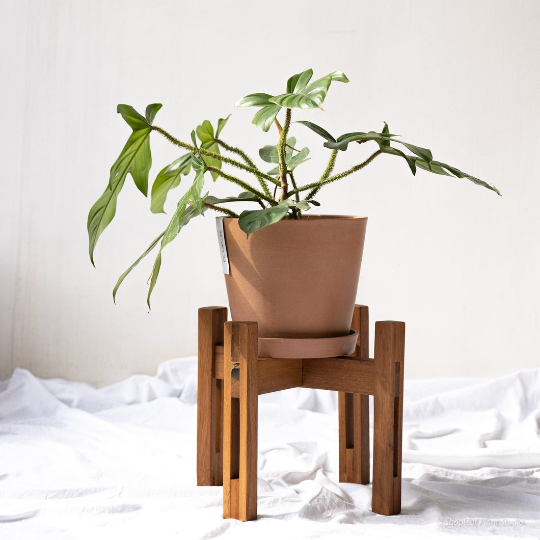 Solid Yakal Plant Stand