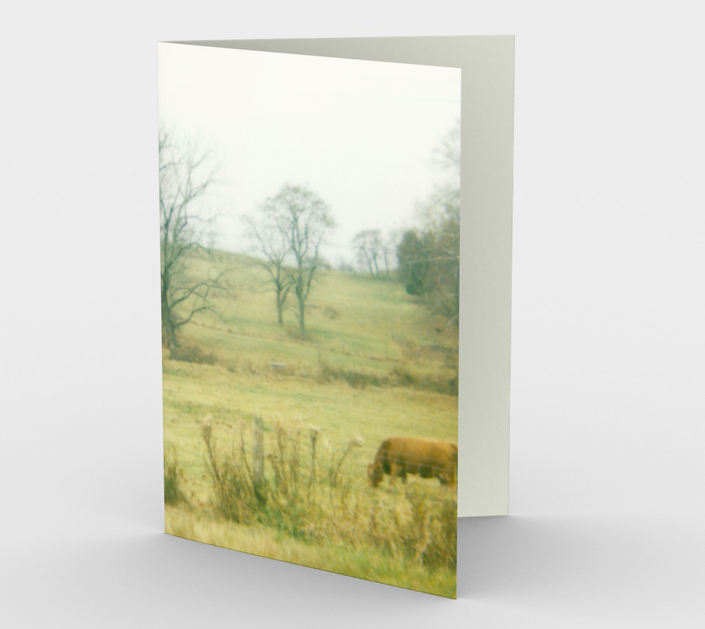 Cow Field Note Card Set (3 pack)