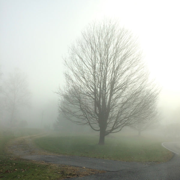 Road Fog 4 Art Print