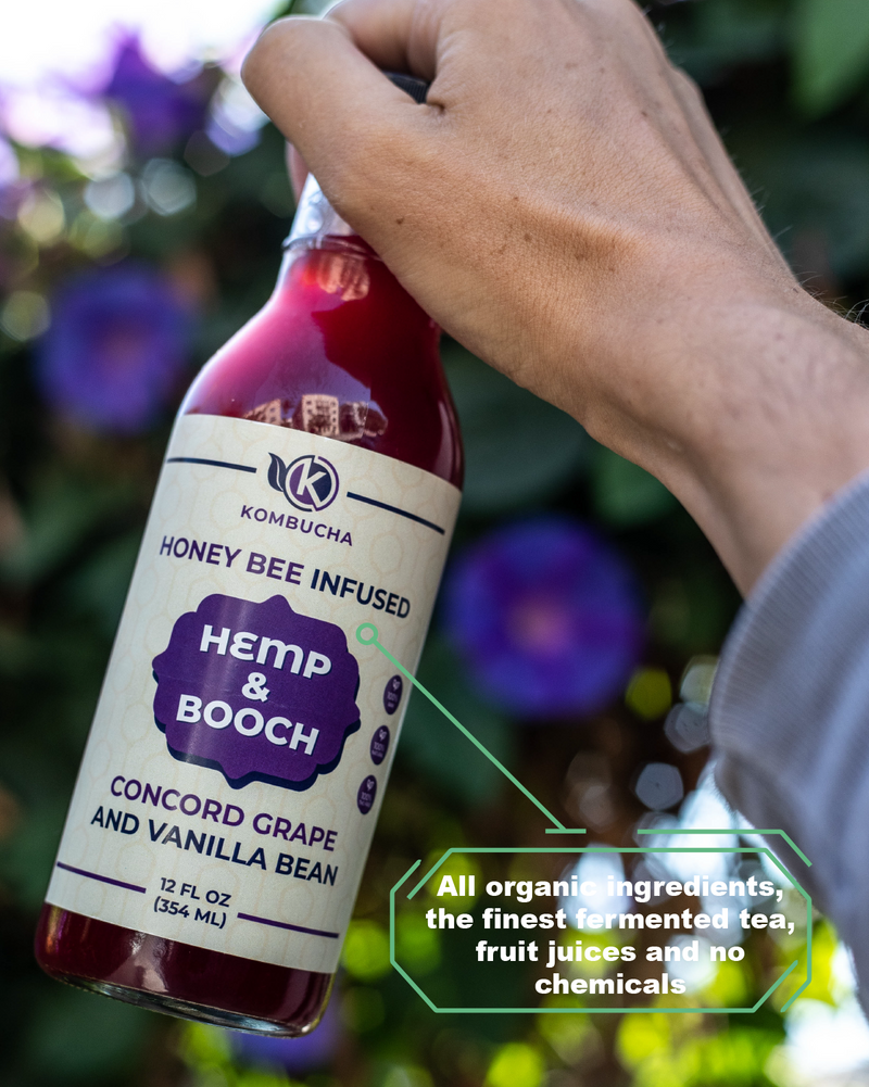 Kombucha - Concord Grape