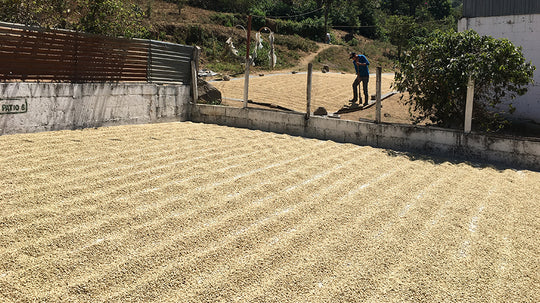 Coffee of the Month - Guatemala Antigua