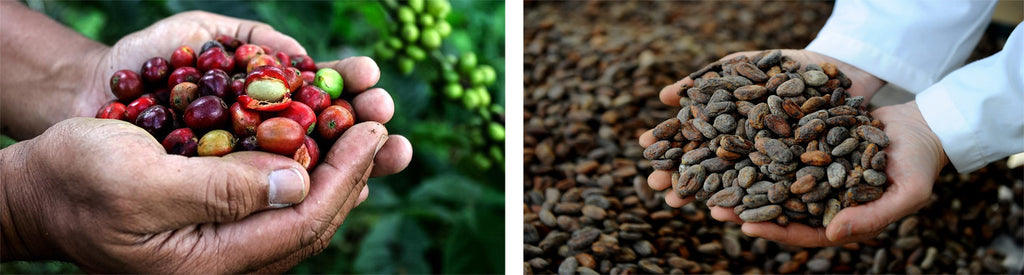 Coffee and Chocolate production processes