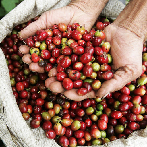 COLOMBIA EXCELSO HUILA - Medium Roast Coffee