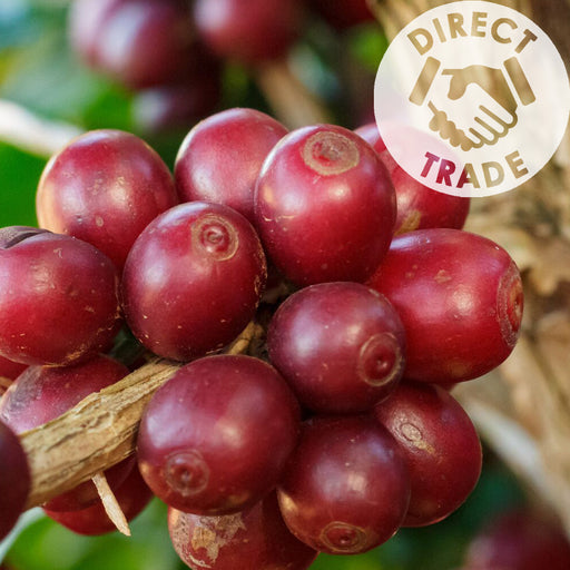 BRAZIL FINCA CACHOEIRA (NATURAL) - Dark Roast Coffee