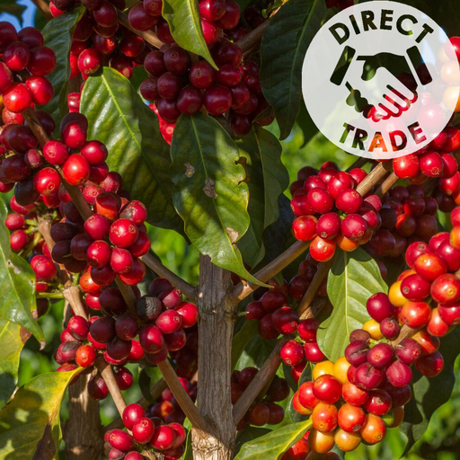 BRAZIL DBARBOSA MICROLOT - Medium-Dark Roast Coffee