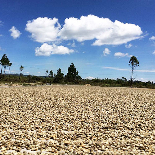 EL SALVADOR DIAMANTE - Medium Roast Coffee