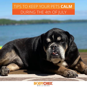 Tips to Keep Your Pets Calm During 4th of July Fireworks