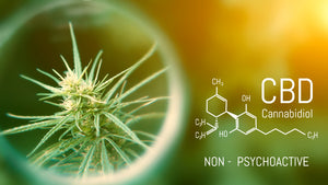 Researchers See Promising Results Using CBD to Treat COVID-19