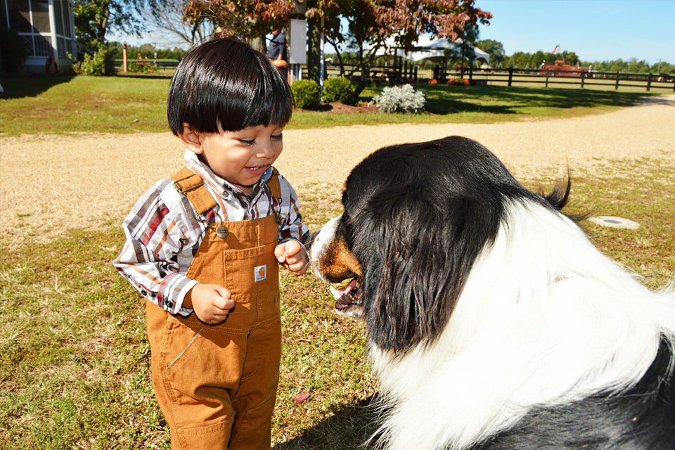 10 Easy Tips To Train Your Dog To Safely Play With Kids Jolly Pets