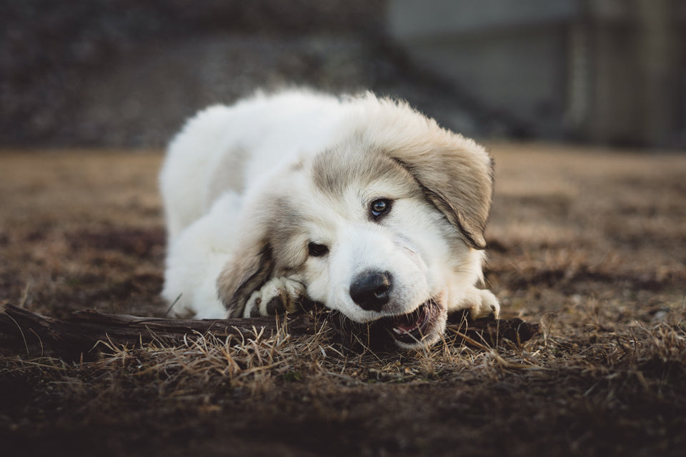 10 Ways to Stop Your Puppy From Destructive Behavior