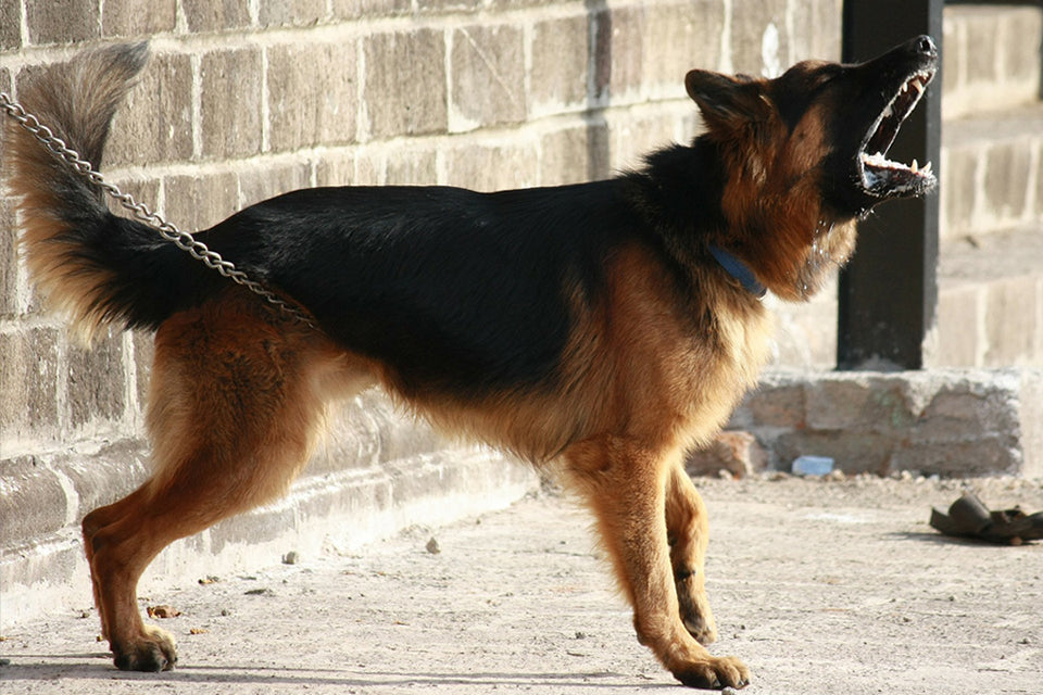 10 of the Best Guard Dog Breeds