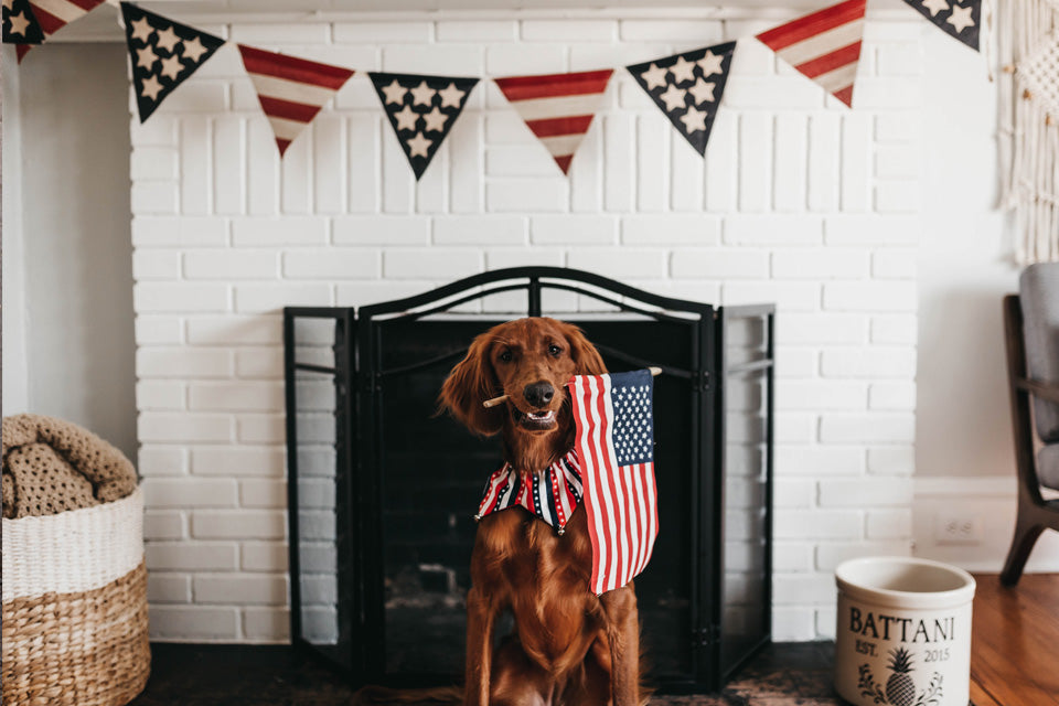 11 Tips to Keep Your Dog Safe on the Fourth of July