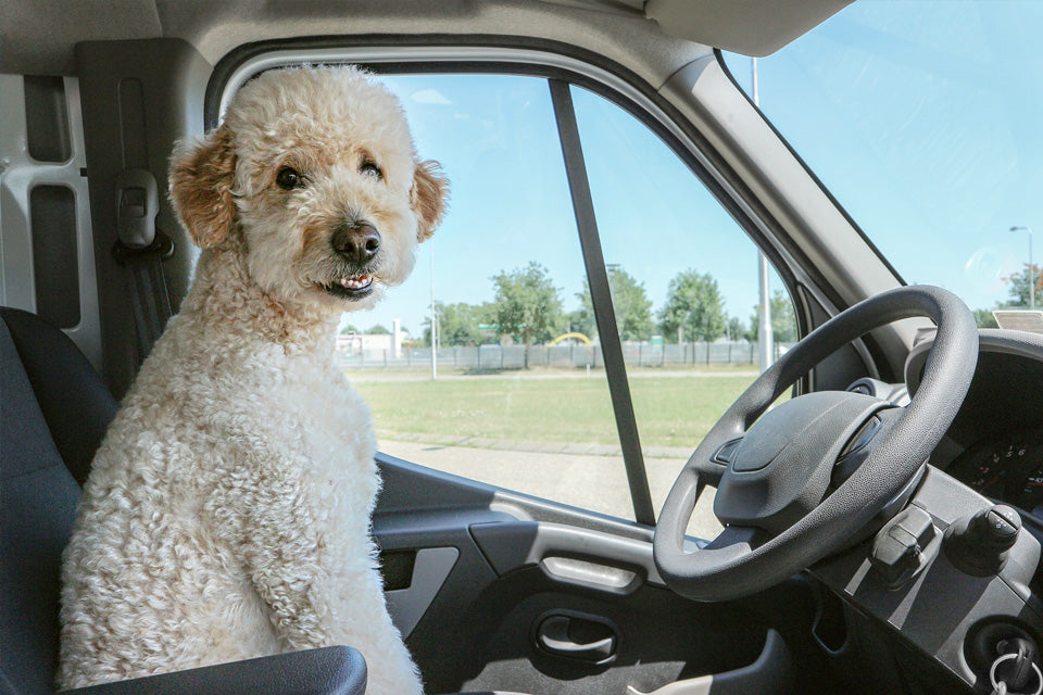 7 Spring Dog Travel Tips