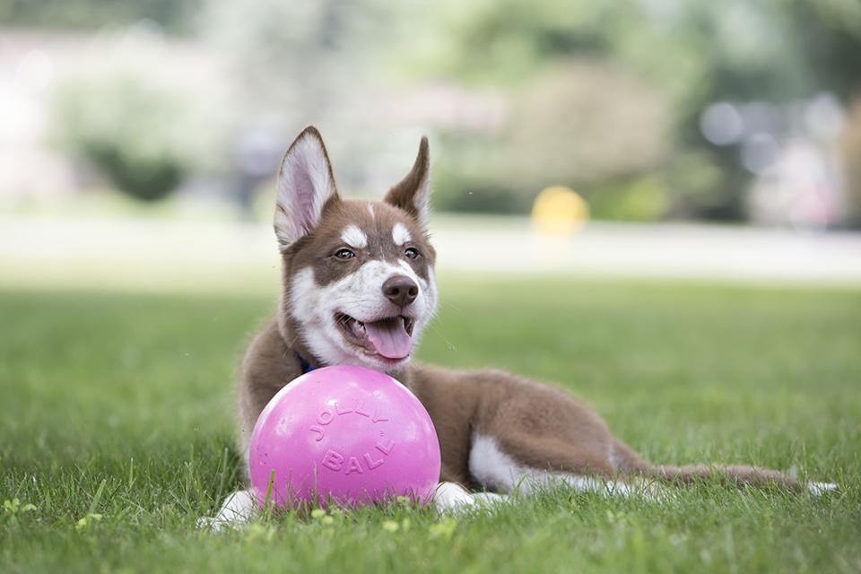 Common Misconceptions About Dog Toys