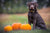 Fun Fall Activities For Dogs