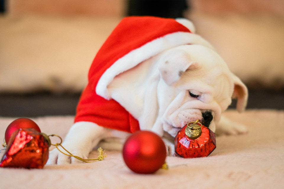 Giving a Dog as a Gift: A Holiday Guide