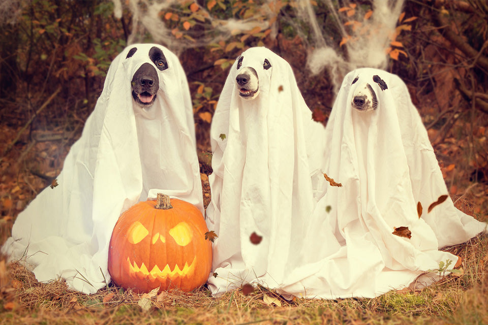 Have a Dog-Day Halloween: Pet Safety Tips