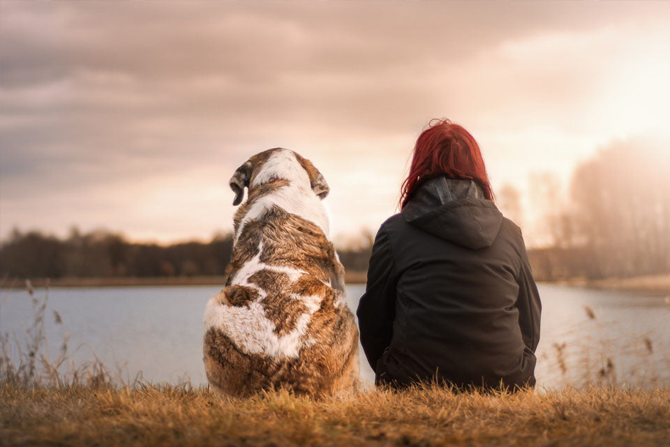 How Your Dog is Keeping You Happier & Healthier