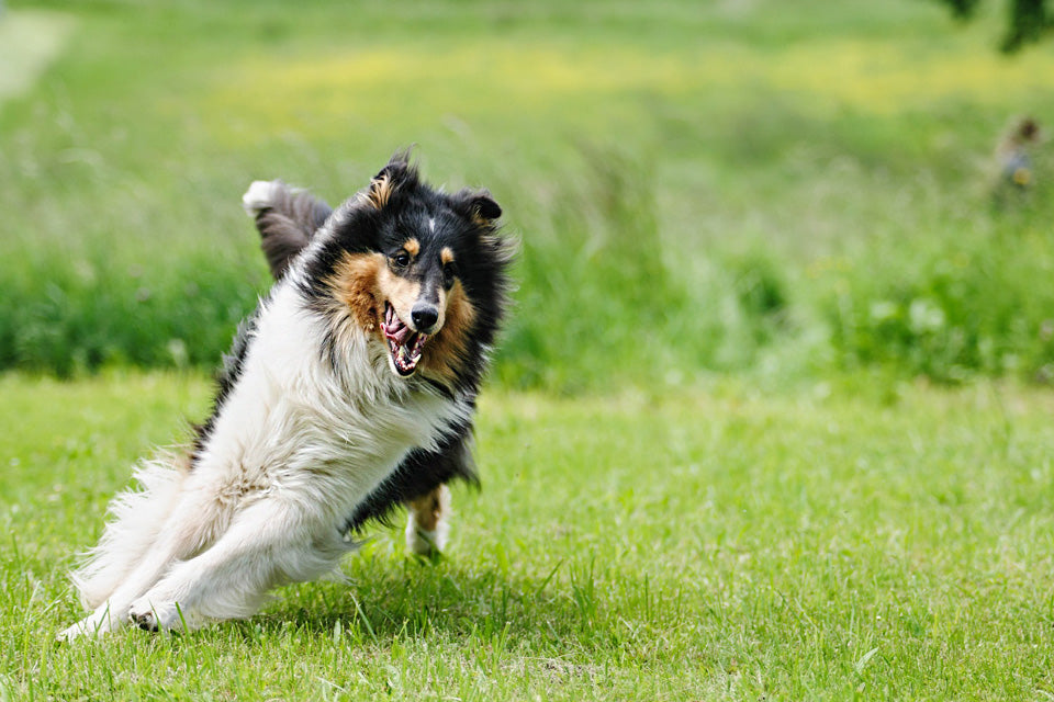 Understanding the Right Amount of Exercise for Each Dog Size