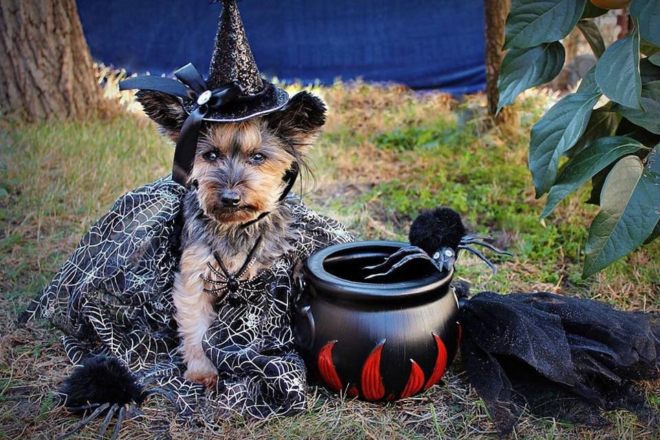 Ways to Celebrate Halloween with Your Dog