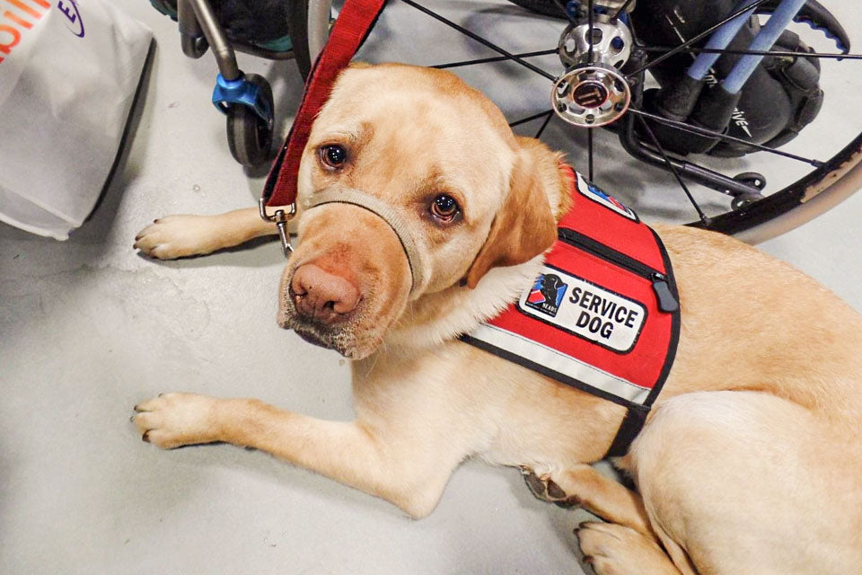 An Inside Look at Service Dog Awareness Month