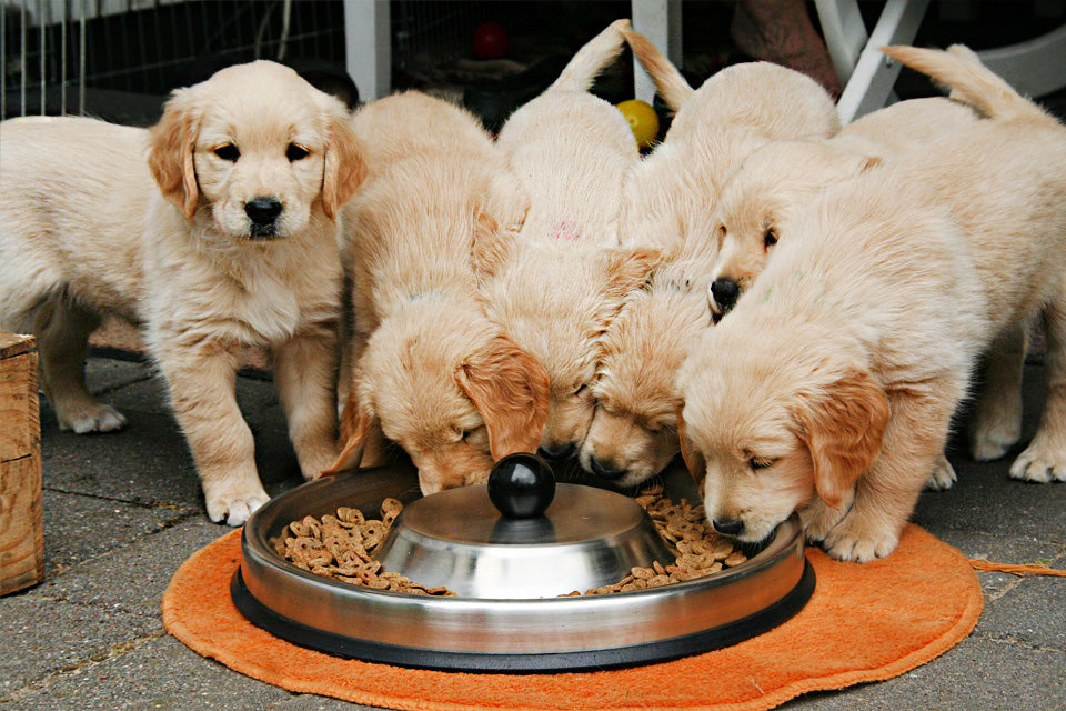 How To Find the Best Dog Food