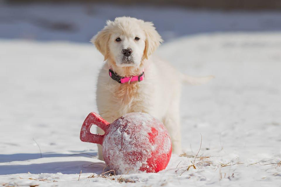 Most Popular Puppy Names of 2014