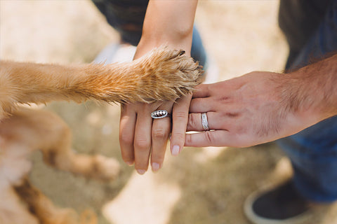 Including Your Four-Legged Friend On Your Big Day