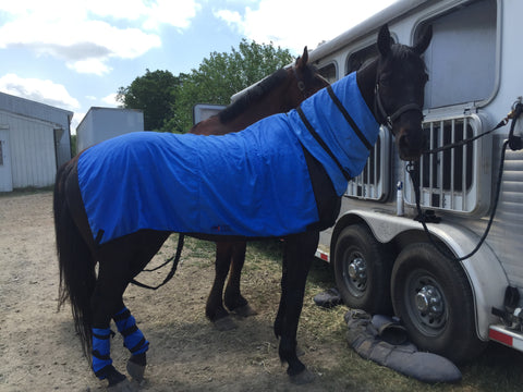 equi cool down cooling products for horses