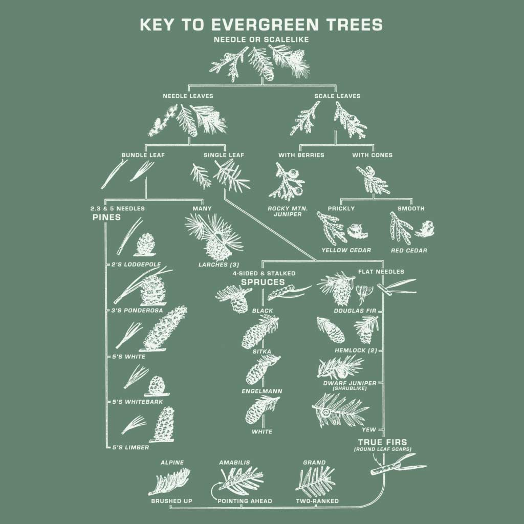 Key to Evergreens - Men's