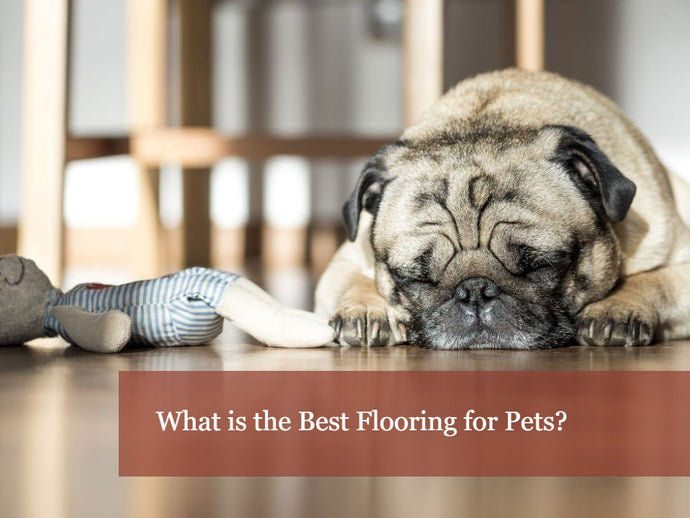 The Best Flooring for Pet Lovers