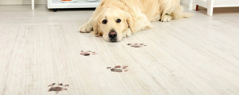 Spills and Spots Easily Wipe on Durable Vinyl Flooring