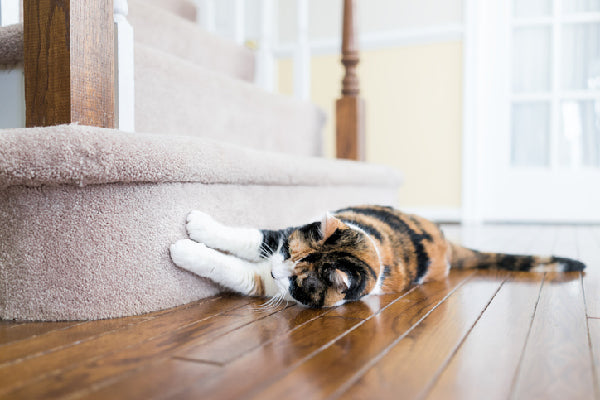 Best Flooring for Cats