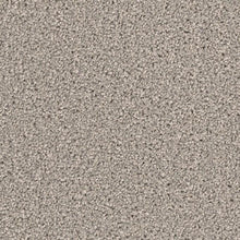 DreamWeaver Carpet - Broadcast PLUS - Silver Birch - 2