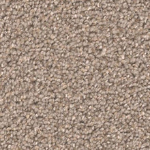 DreamWeaver Carpet - Broadcast PLUS - Cinder - 2