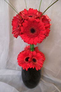Gerbera Ball Design Corporate