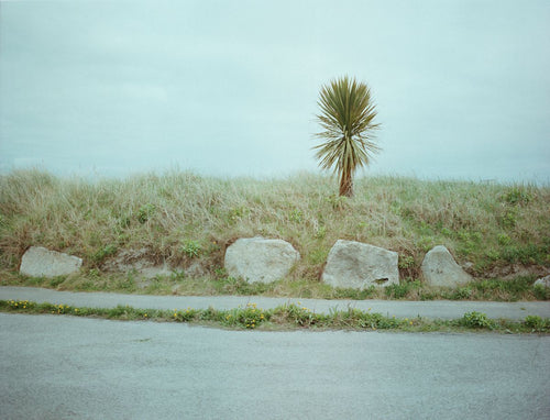 A lone palm tree at Dublin port. From a series documenting County Dublin, Ireland.