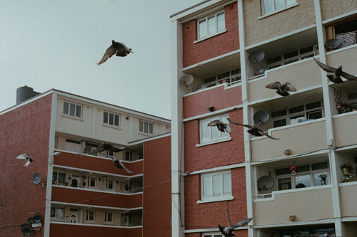Pigeons fly over flats, central Dublin. From a series documenting County Dublin, Ireland.