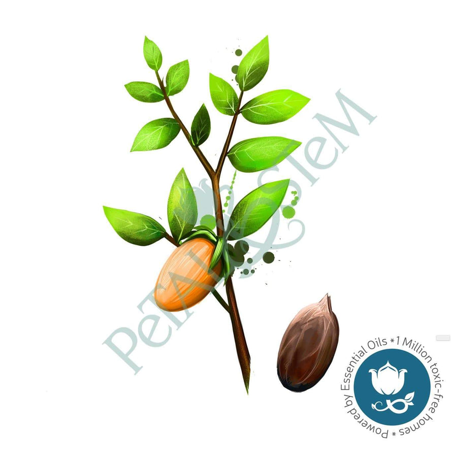 Jojoba Oil 100% Pure Organic ~ cold pressed & unrefined ~ closest to the human skin ~ Simmondsia Chinensis ~ Carrier Oil - Petal and Stem