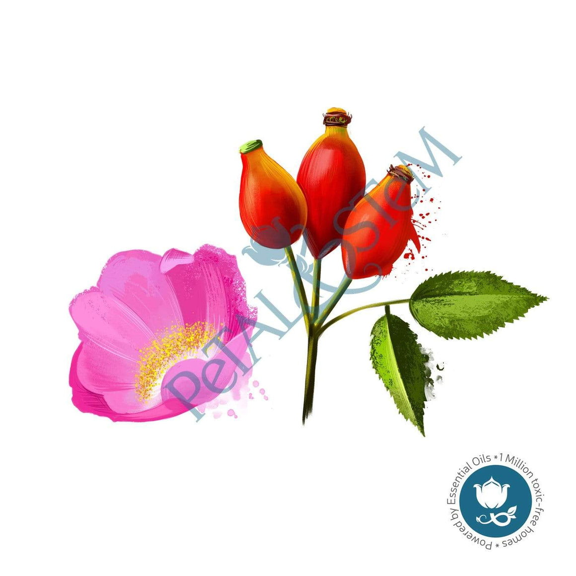 Rosehip Oil 100% Pure Organic  ~ cold pressed & unrefined ~ Rosa Rubiginosa ~ Carrier Oil ~ for Essential Oils - Petal and Stem