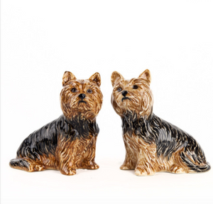 Yorkshire Terrier Salt and Pepper
