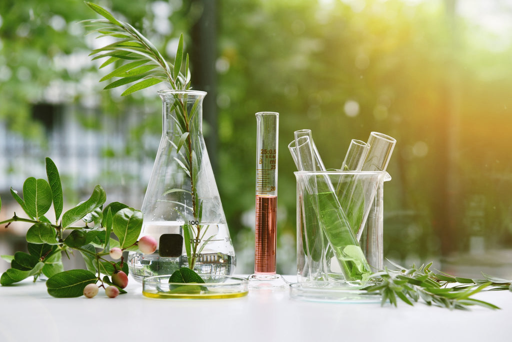 Scientific beaker with a petri dish and different plants from nature on a table