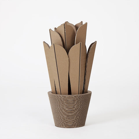 Vaso In Cartone Agave Medium NextMaterials CactusHome